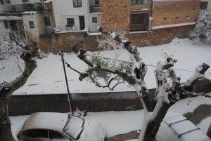 El plàtan durant la nevada del gener de 2010